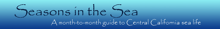 Seasons in the Sea - A month-by-month guide to Central California sea life
